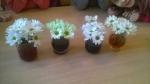 eksperyment z kwiatami
